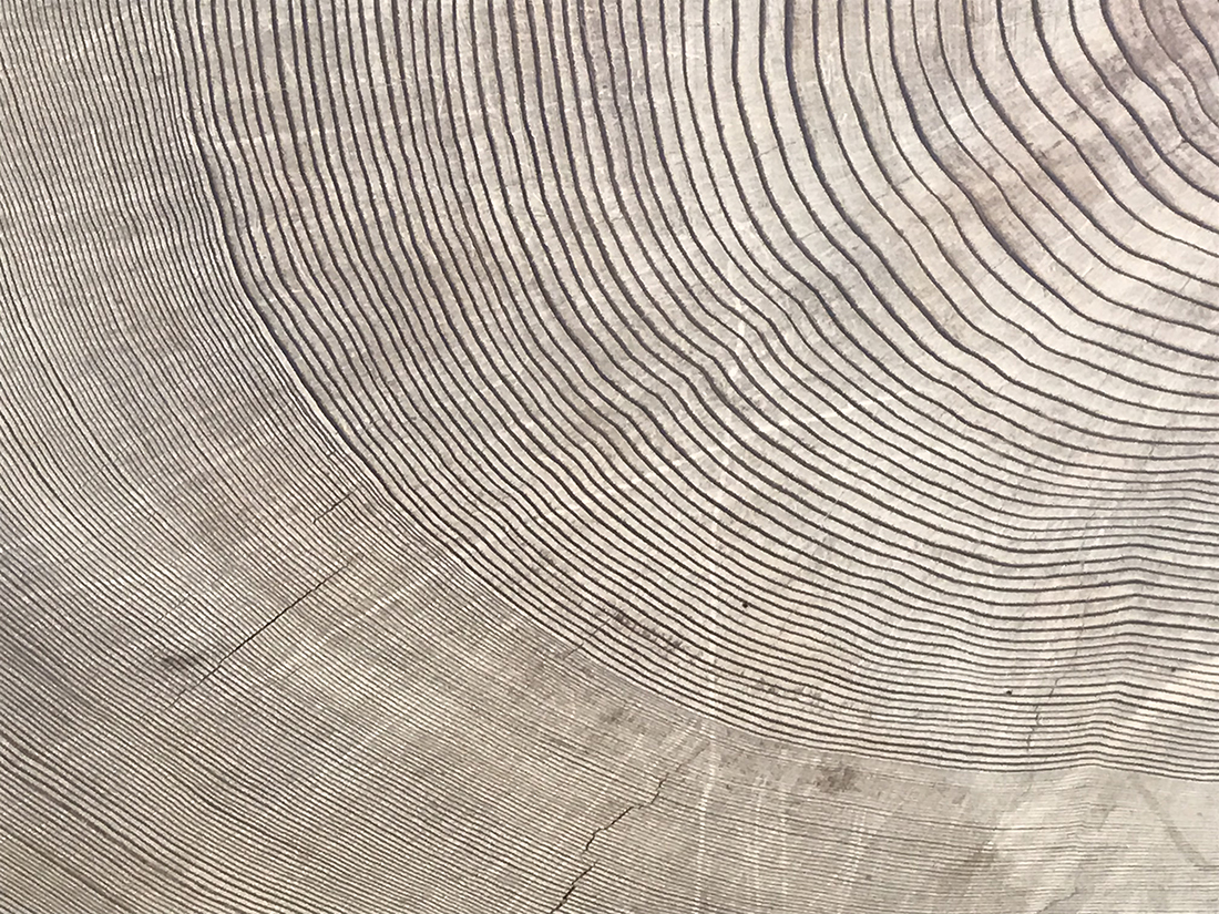 Performing Dendrochronology: Tree-Ring Music for Three Woodwinds